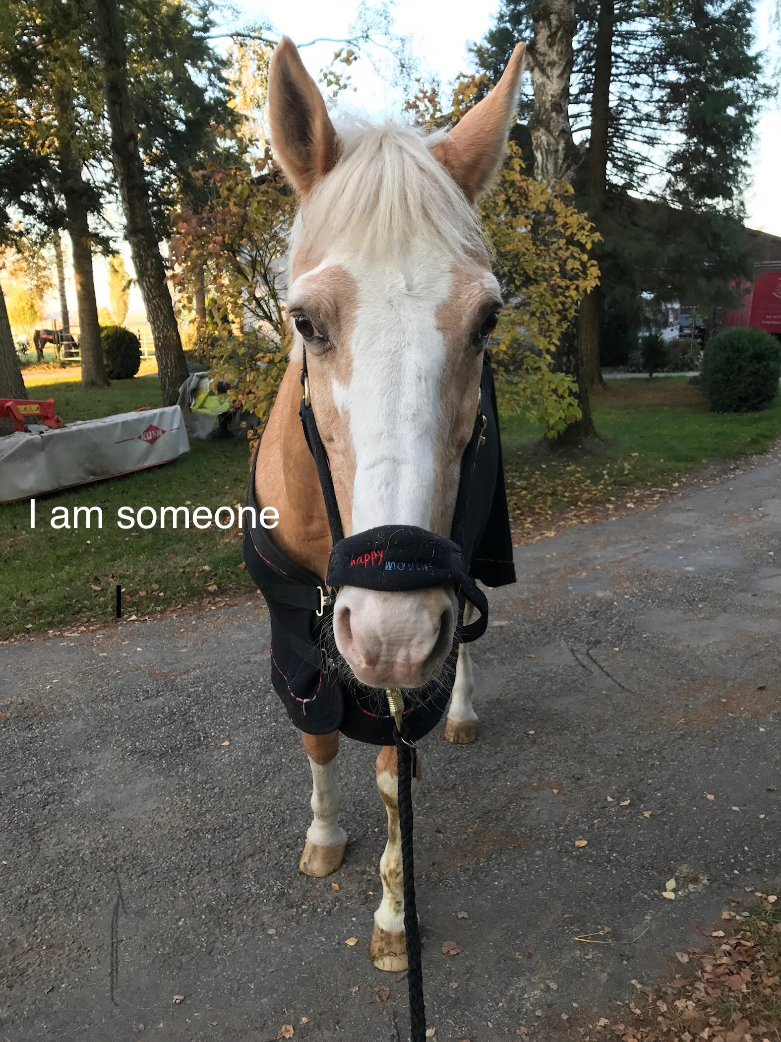 I am someone