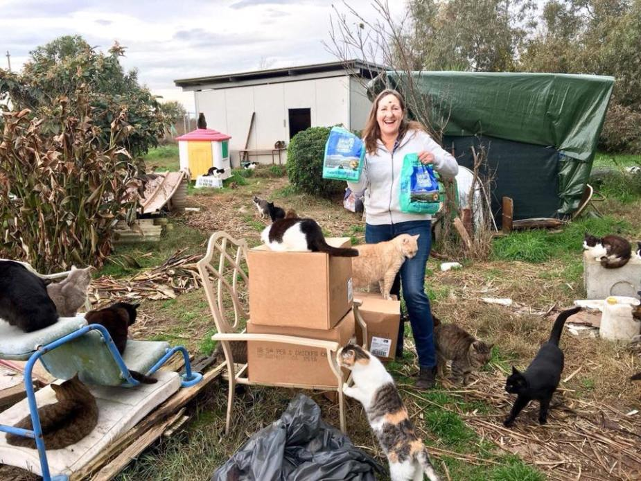 Cat donations