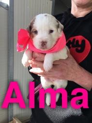 Rossella puppy