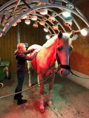 solarium horse
