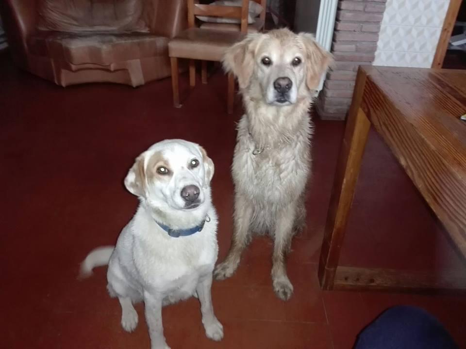 Dogs Umbra