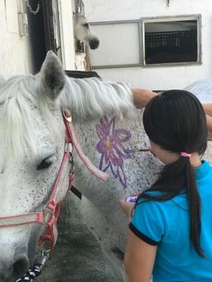 Anna Paint horses