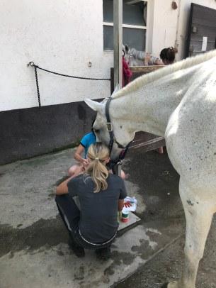 Julia paint horses